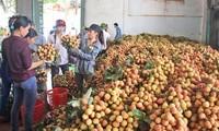 Amerika Serikat  mengimpor leci dan kelengkeng Vietnam