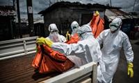 WHO  memprediksi jumlah orang yang kejangkitan virus Ebola akan  turun drastis pada awal  tahun mendatang.