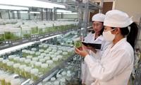 Komite Gabugan Vietnam-Jepang tentang kerjasama ilmu pengetahuan dan teknologi.