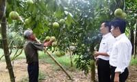 Berbagi pengalaman internasional tentang pengembangan rantai nilai dalam produksi pertanian