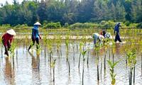Menerapkan secara luwes pengalaman internasional untuk menghadapi perubahan iklim di Viet Nam