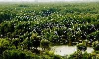Datang mengunjungi kebun burung bangau Bang Lang