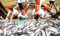 The US agricultural subsidy policy hampers tra fish export