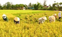 Japan and Vietnam enhance agricultural cooperation