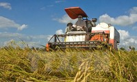 Vietnam launches sustainable rice production program