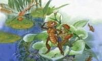 Adventures of a cricket, 70 years after