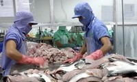 DOC imposes high anti-dumping duties on Vietnam's tra fish