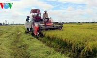 Vietnam's long-term strategy for rice production for export