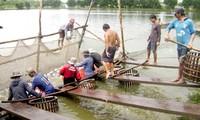 Vietnam restructures tra fish production