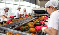 Vietnam's exports prosper in the first half of 2014