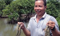 Aquaculture under forest canopy helps Tra Vinh mangrove trees revive