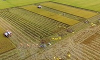 Vietnam's agriculture to benefit from TPP says Argentine paper