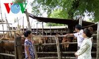 Ninh Thuan farmers' mutual support for economic development