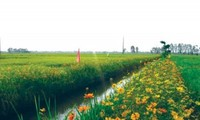 """""""Rice field with flower bank"""" model"""