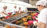 Vietnam expands fruit and vegetable export market
