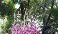 Hanoi hosts annual orchid festival