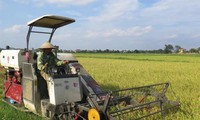 Thai Binh's agricultural economy boosted