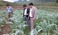 Medicinal herbs improve mountainous people's livelihood