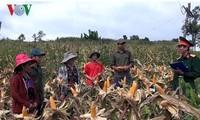 """2015年""""农业-农村-农民""""主题写作比赛颁奖"""