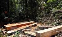 Nguyen Xuan Phuc félicite Dak Nong pour sa sévérité à l'égard des exploitants illégaux de forêt