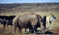 Concours de courts métrages sur la lutte contre le trafic des animaux sauvages