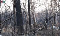 Feux en Australie: 24 personnes arrêtées pour incendie volontaire
