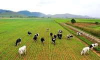 Le Vietnam souhaite adapter sa filière élevage au changement climatique
