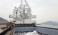 Riz: le Vietnam resterait deuxième exportateur mondial, selon les États-Unis