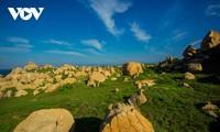 Khu vườn địa đàng đá trên đảo Hòn Cau (Cù Lao Câu)