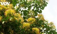 Mùa hoa Bún nở rộ mộc mạc bên dòng Kiến Giang