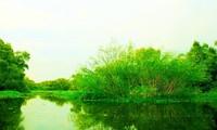 Vẻ đẹp rừng tràm Trà Sư ở An Giang