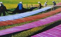 ベトナムのシルク産業
