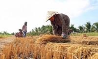 ベトナムの気候変動対応を支援するUNDPの活動