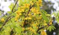 イエントゥ山の梅の花