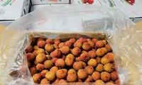 ルックガン県のライチが豪メルボルンで販売