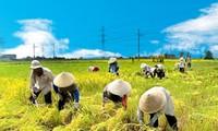 越南农业部门引进高技术、环境友好型项目