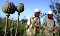 东盟力争于2015年建成无毒品区