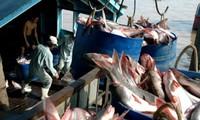 越南茶鱼协会反对美国政府对越南茶鱼征收高额反倾销税