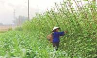 安沛省大力开展农村劳动力职业培训