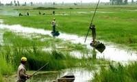 九龙江平原地区迈向绿色和可持续生产