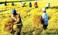 2015年越南力争出口农产品320亿美元