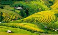 越南北部安沛省即将举行穆庚寨梯田国家名胜区旅游文化周
