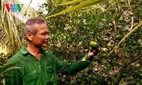 高棉族农民石弟成为二好干部的故事