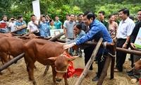 越南国家主席张晋创出席种牛银行项目实施5年总结会议