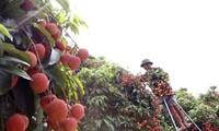 评选出关于农业、农村、农民主题的多项优秀作品