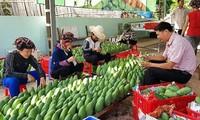 越南纺织品服装和蔬菜瓜果出口额大幅增长