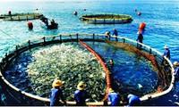 越南-挪威合作发展水产养殖加工业