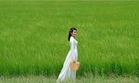 一组歌颂越南国服——奥黛的歌曲