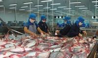 九龙江平原地区查鱼出口潜力巨大