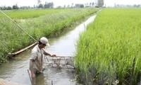 朔庄省稻虾轮作模式带来的经济效益